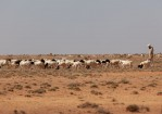 How climate insecurity could trigger more conflict in Somalia