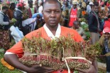 Kenya engages Somalia to lift ban on miraa